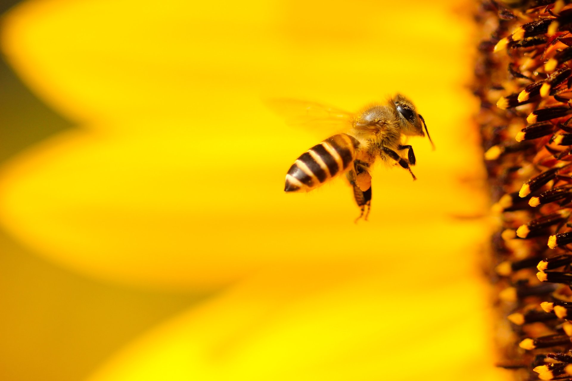 EcoSpeed Manchester Same Day Couriers to hand out bee friendly seeds to tackle bee decline