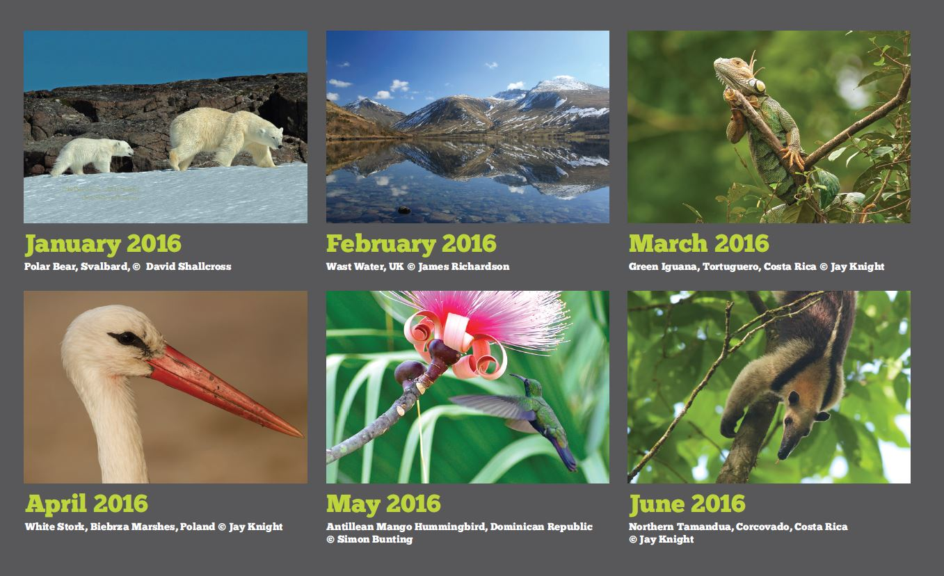 EcoSpeed Wildlife Calendar Photography Competition 2016