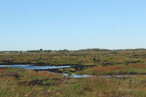 Little Woolden Moss Project Lancashire Wildlife Trust