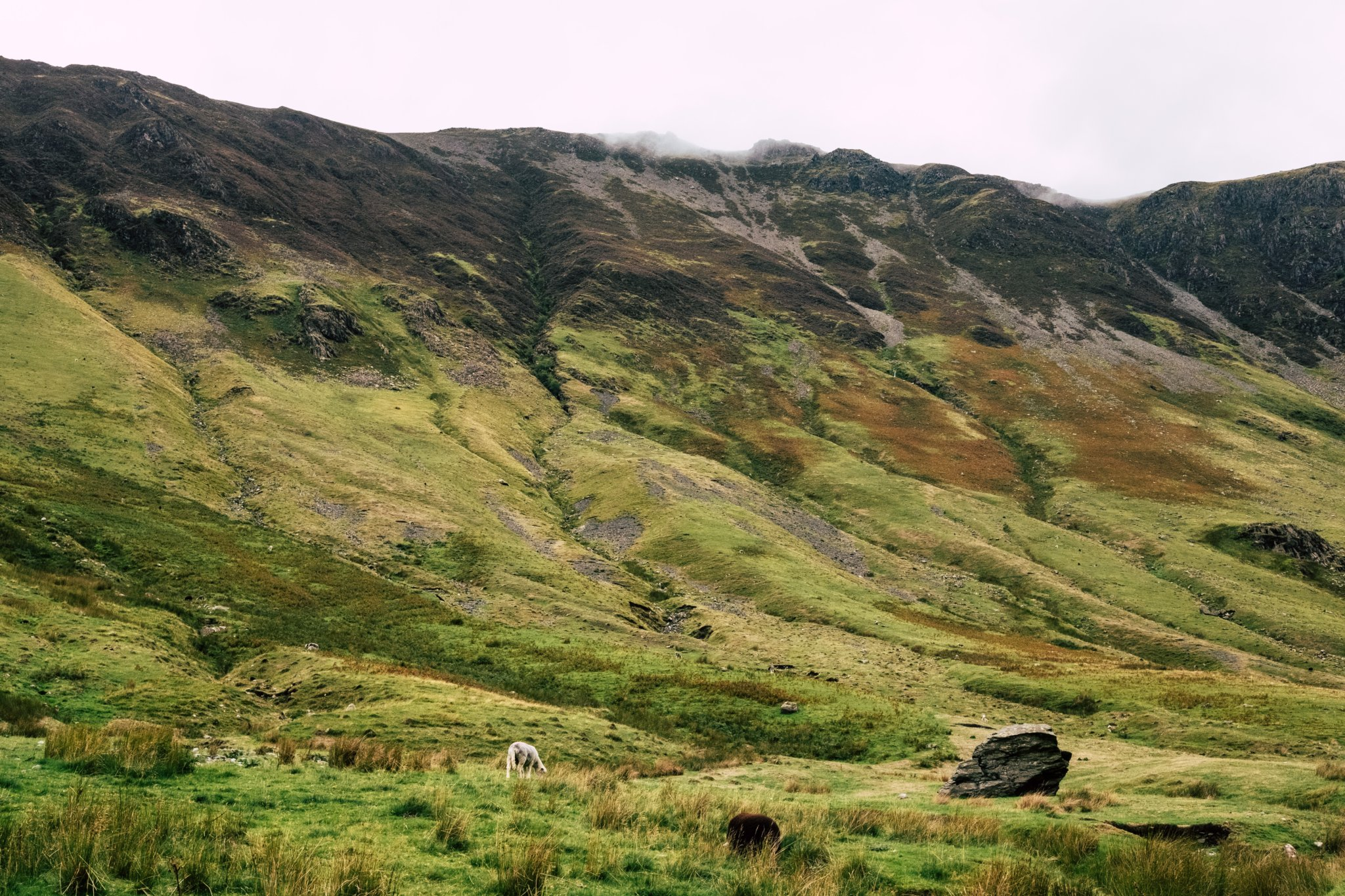 Local wildlife charity moorland