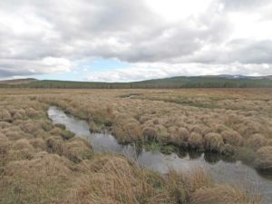 Example of a peatland environment