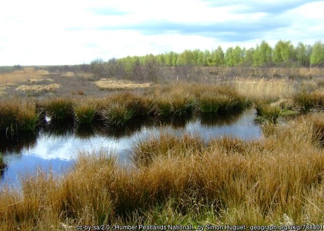 Peatlands at Humber Nature Reserve