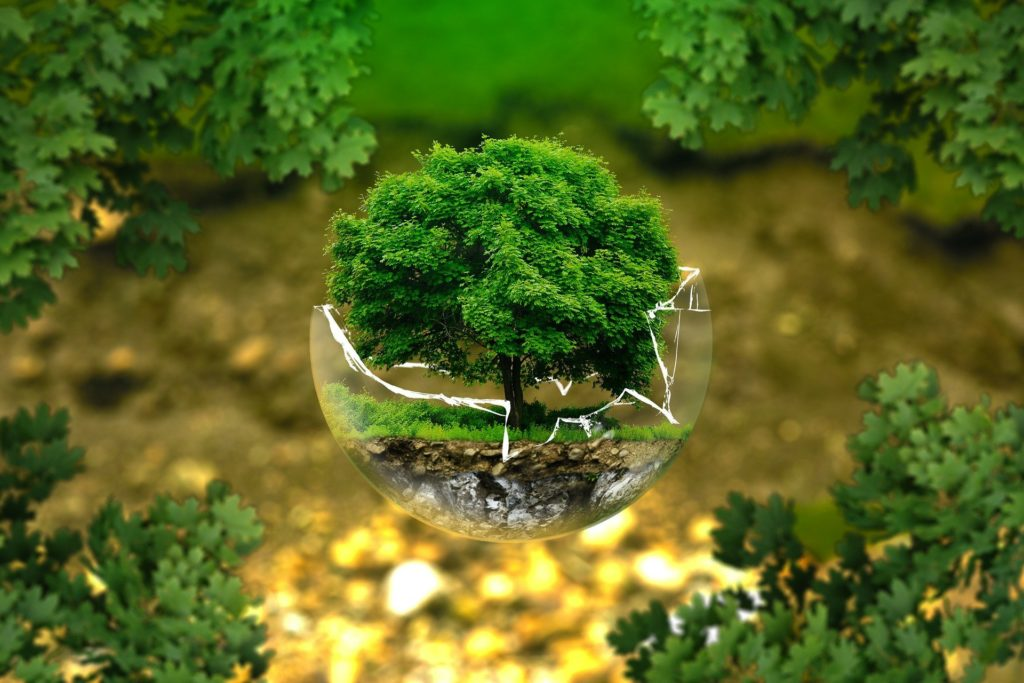A tree growing from a man made globe reflecting ecospeed same day couriers commitment to being environmentally friendly